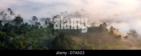 Mist low cloud hanging over lowland dipterocarp rainforest just after sunrise Danum Valley Sabah State Island Borneo - Stock Photo