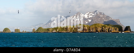Wandering albatross Diomedea exulans flying over Bay Isles South Georgia Island - Stock Photo