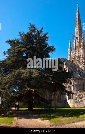 Yew tree Norwich Cathedral - Stock Photo