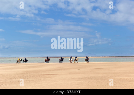 A group of horses and ponies with riders are trekking in a line on the beach with the sea and mountains in the background. - Stock Photo