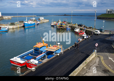 Seahouses harbour, Seahouses, Northumberland, England, UK - Stock Photo
