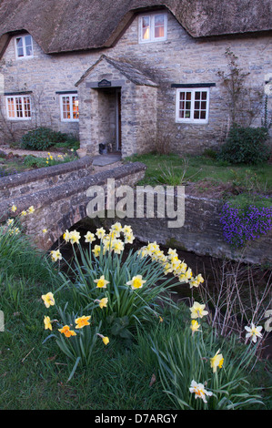Spring has arrived. Daffodils grow in front of this picturesque thatched cottage in the Dorset village of Martinstown. - Stock Photo