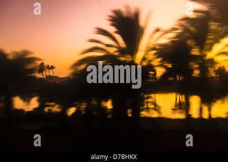 Abstract silhouette of palm grove by the river Nile at late sunset taken from a moving train. Egypt - Stock Photo