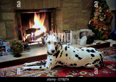Fireside Dalmatian. - Stock Photo
