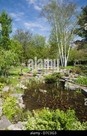 Garden pond in residential back garden england stock for Ornamental pond plants
