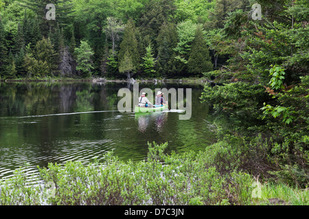 Senior Couple Canoeing In A Lush Green Bay In Spring On Smoke Lake In Algonquin Park;Ontario Canada - Stock Photo