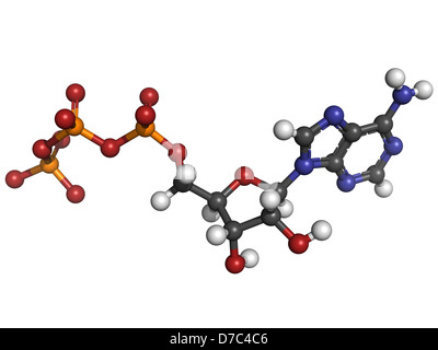 Adenosine triphosphate (ATP) energy transport molecule, chemical structure. ATP is the main energy transport molecule - Stock Photo