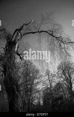 Scary tree in the cemetery - Stock Photo