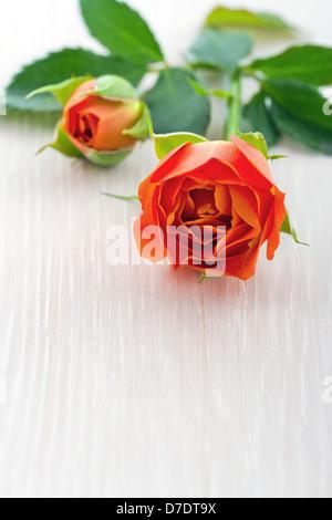 Closeup of orange rose on white wooden background - Stock Photo