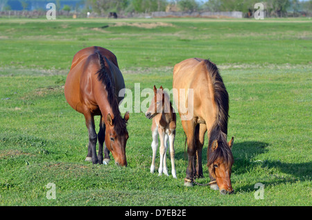 young foal with his mother in spring time - Stock Photo