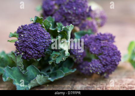 Brassica oleraceae. Purple sprouting broccoli on a wooden board. - Stock Photo