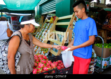 Homestead Florida US Route 1 Redlands Farmers Market shopping produce for sale display Asian woman dragon fruit - Stock Photo