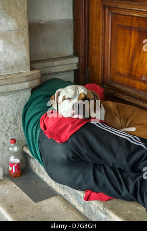 Homeless man sleeping with his dog in a doorway. Homeless UK homeless. Homeless person UK. - Stock Photo