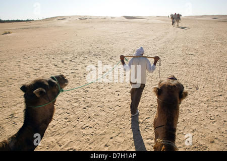 Beduins leading tourists on camels at the Sahara desert on September 17, 2012 in Douz, Kebili, Tunisia - Stock Photo