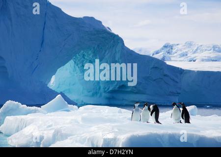 All three species of Brush-Tailed Penguins, Adélie Penguin, Chinstrap Penguin, and Gentoo Penguin.  Antarctica - Stock Photo