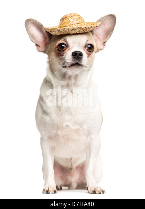 Chihuahua, 2 years old, sitting and wearing a straw hat against white background - Stock Photo