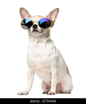 Chihuahua, 2 years old, sitting and wearing sunglasses against white background - Stock Photo