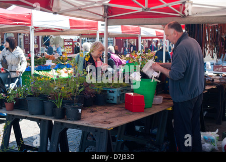 Plant stall in the Market Square in Newark on Trent, Nottinghamshire England UK - Stock Photo