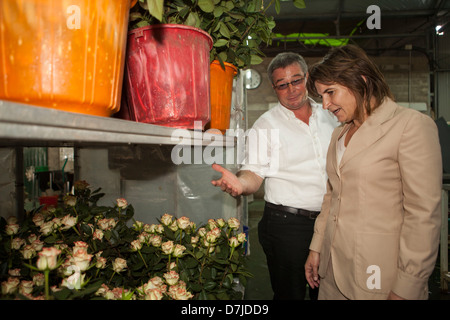 Dutch minister lilanne ploumen (development aid) visits a dutch flower farm outside Addid Abbeba, Ethiopia - Stock Photo