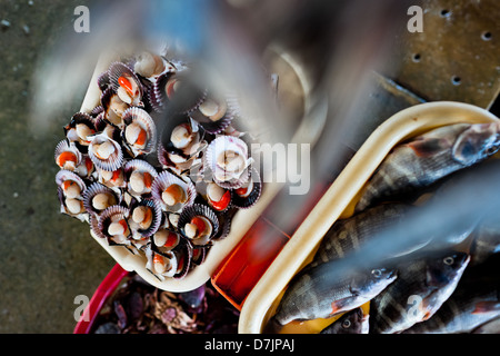 Fresh scallops, crabs and fish for sale seen at Chorrillos seafood and fish market in Lima, Peru. - Stock Photo