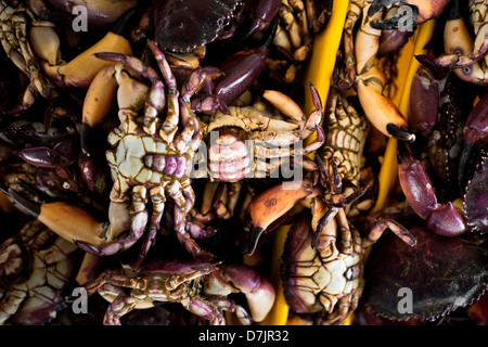 Crabs for sale seen at Chorrillos seafood and fish market in Lima, Peru. - Stock Photo