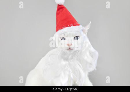 Santa cat portrait against grey background - Stock Photo