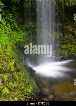 View of Koropuku Falls, a small waterfall off the beaten track, buried within The Catlins Rainforest Reserve, Otago, - Stock Photo