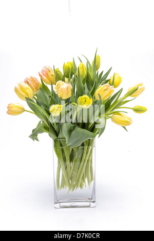 Fresh tulip flower arrangement in a clear glass vase. - Stock Photo