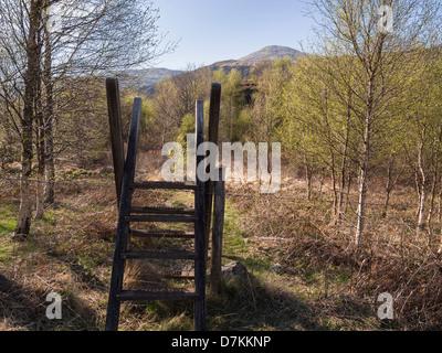 Ladder stile over a fence on a path through a woodland plantation in Nant Gwynant valley, Snowdonia, Gwynedd, North - Stock Photo