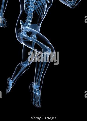 Running skeleton, artwork - Stock Photo