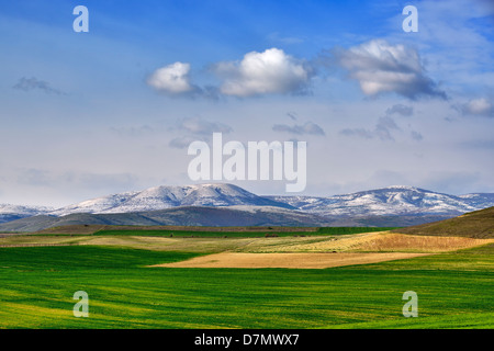 Field in spring from Macedonia - Stock Photo