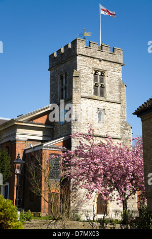 St. Marys / Saint Mary's Anglican Church of England with cherry blossom tree. Main square, old town centre Twickenham. - Stock Photo