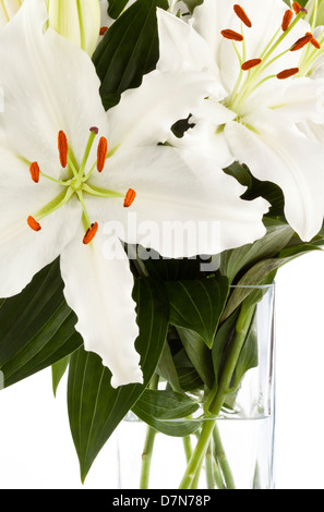 A vase of white lilies on a white background - Stock Photo