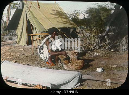 Somali man playing with two cheetah cubs - Stock Photo