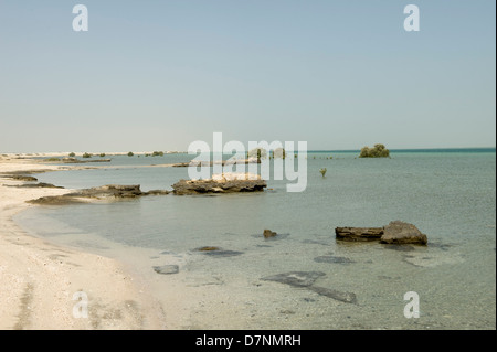 A remote Abu Dhabi beach with rocks, sand sea on the Arabian Gulf at high water and isolated mature and young grey - Stock Photo