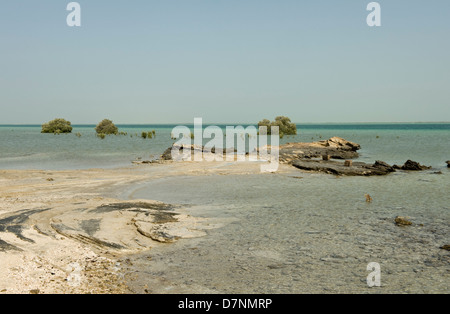 A remote Abu Dhabi beach with rocks, sand sea on the Arabian Gulf at high water and isolate mature and young grey - Stock Photo