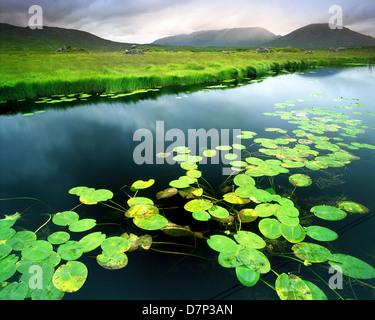 IE - CONNEMARA: Ahalia River at Maam Cross - Stock Photo