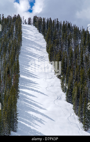 Monarch Mountain lifts closed for the season, but one hiker and his dog left tracks in the fresh May snow on Gunbarrel - Stock Photo