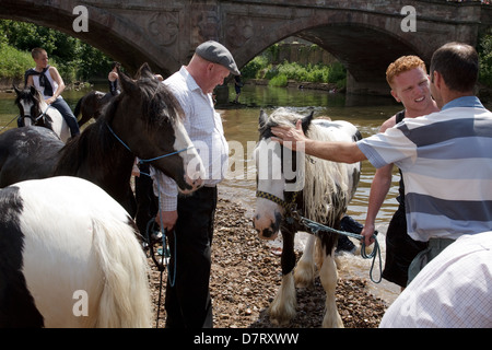People with horses by the river at Appleby Fair, an annual gathering of Gypsy and Traveller communities in Cumbria, - Stock Photo