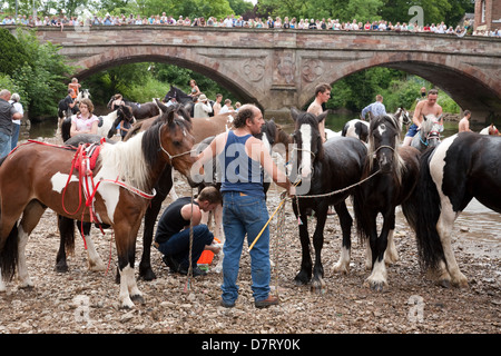 Horses by the river at the Appleby Fair, an annual gathering of Gypsy and Traveller communities in Cumbria, England - Stock Photo