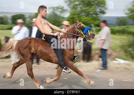 A speeding horse and rider at the Appleby Fair, an annual gathering of Gypsy and Traveller communities in Cumbria. - Stock Photo