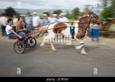 Men driving a speeding horse and cart at the Appleby Fair, an annual gathering of Gypsy and Traveller communities - Stock Photo