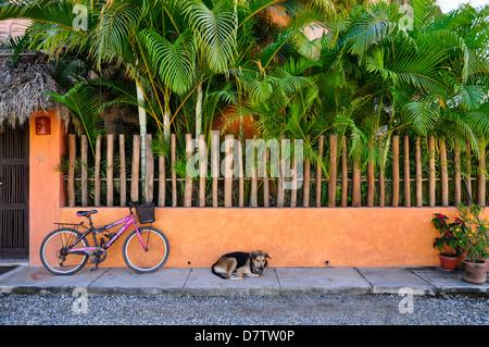Dog sleeping on sidewalk in San Pancho, Mexico. - Stock Photo