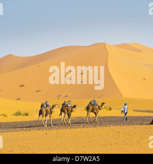Camel caravan in Erg Chebbi Desert, Sahara Desert near Merzouga, Morocco, North Africa - Stock Photo