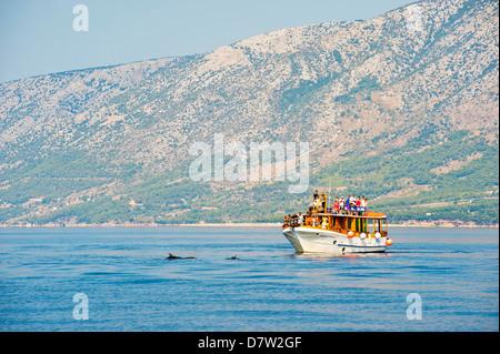 Dolphin watching boat trip off Brac Island, Dalmatian Coast, Adriatic, Croatia - Stock Photo