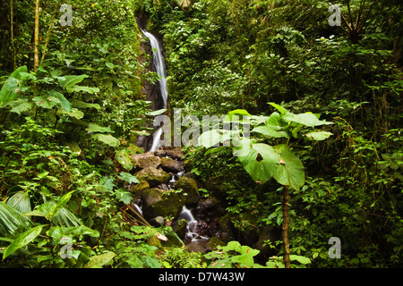 Waterfall at Arenal Hanging Bridges where the rainforest is accessible via walkways, La Fortuna, Alajuela Province, - Stock Photo