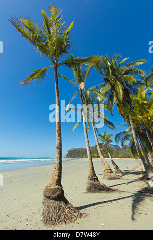 The white sand palm-fringed beach at this laid-back village & resort; Samara, Guanacaste Province, Nicoya Peninsula, - Stock Photo