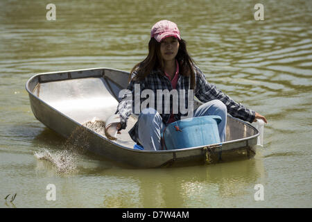Bangtathen, Saphun Buri, Thailand. May 14, 2013. A woman feeds shrimp on a shrimp farm in Saphunburi, Thailand. - Stock Photo
