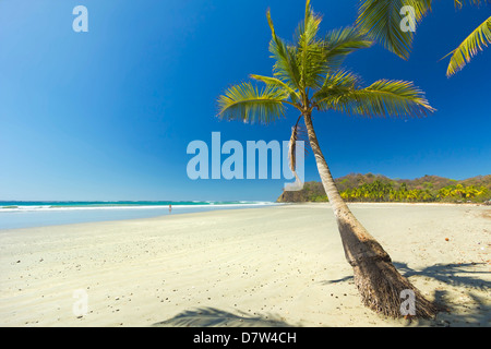 The white sand palm-fringed beach at laid-back village and resort, Samara, Nicoya Peninsula, Guanacaste Province, - Stock Photo