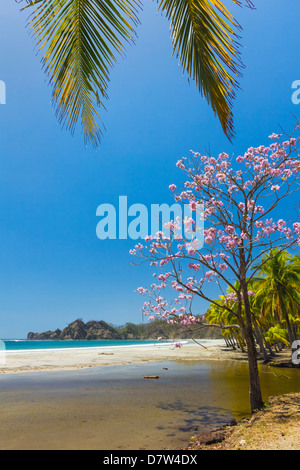 Beautiful palm fringed white sand Playa Carrillo, Carrillo, near Samara, Guanacaste Province, Nicoya Peninsula, - Stock Photo